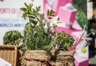 d'erbe di natura e benessere 2018