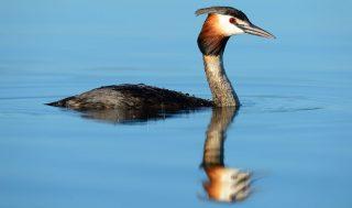 muse biodiversità 2020 davide franchini