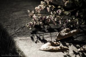 D'erbe di natura e benessere 2018 - Spilimbergo (PN) - Davide Franchini